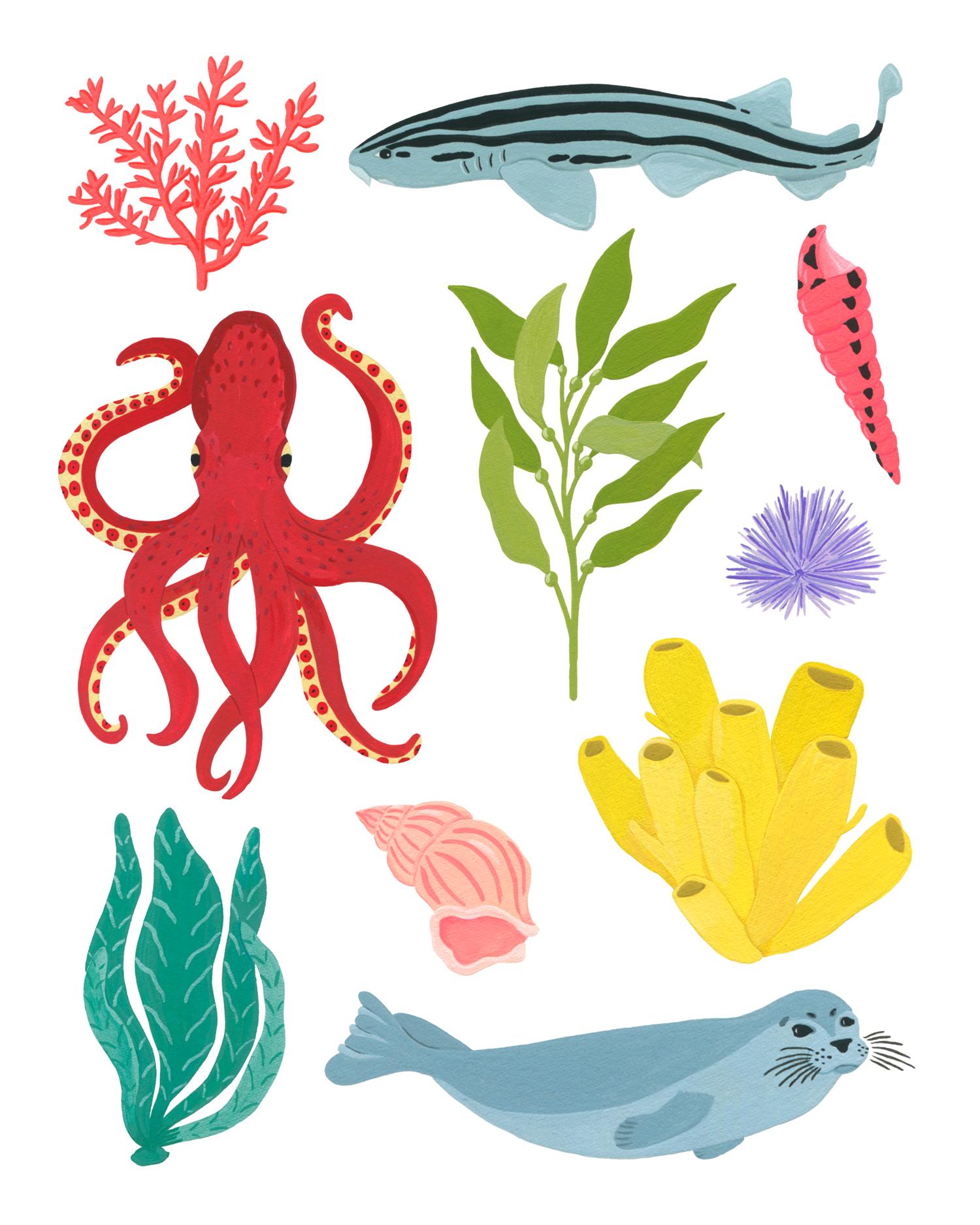 Marie-pellet-illustrations-portfolio-gouache-myoctopusteacher-seal-shark-corail-shell-octopus-projet-personnel-coquillages-algues